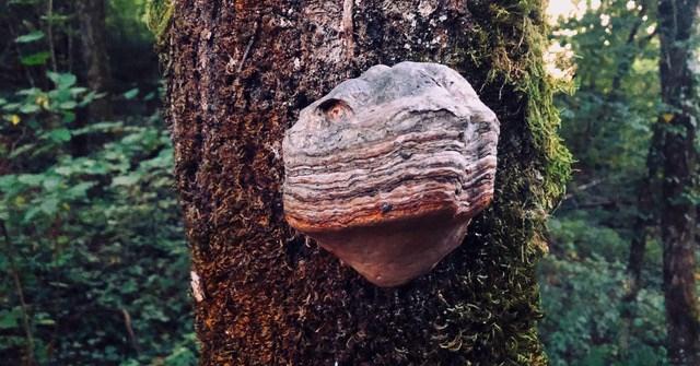 Mos_espa: Balade en Forêt - Flyer front