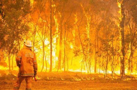 Australian promoters announce bushfire relief fundraisers image